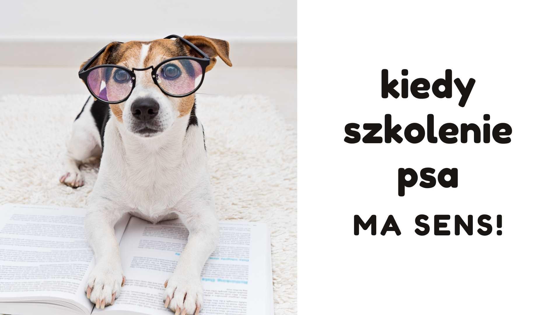 Pies w okularach leży na otwartej książce