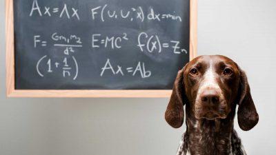 Pies obok szkolnej tablicy
