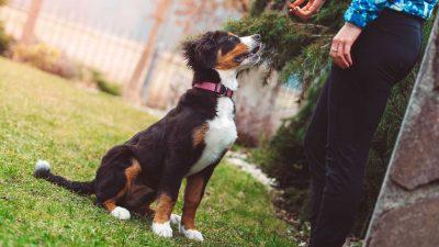 Pies z właścicielem na dworze