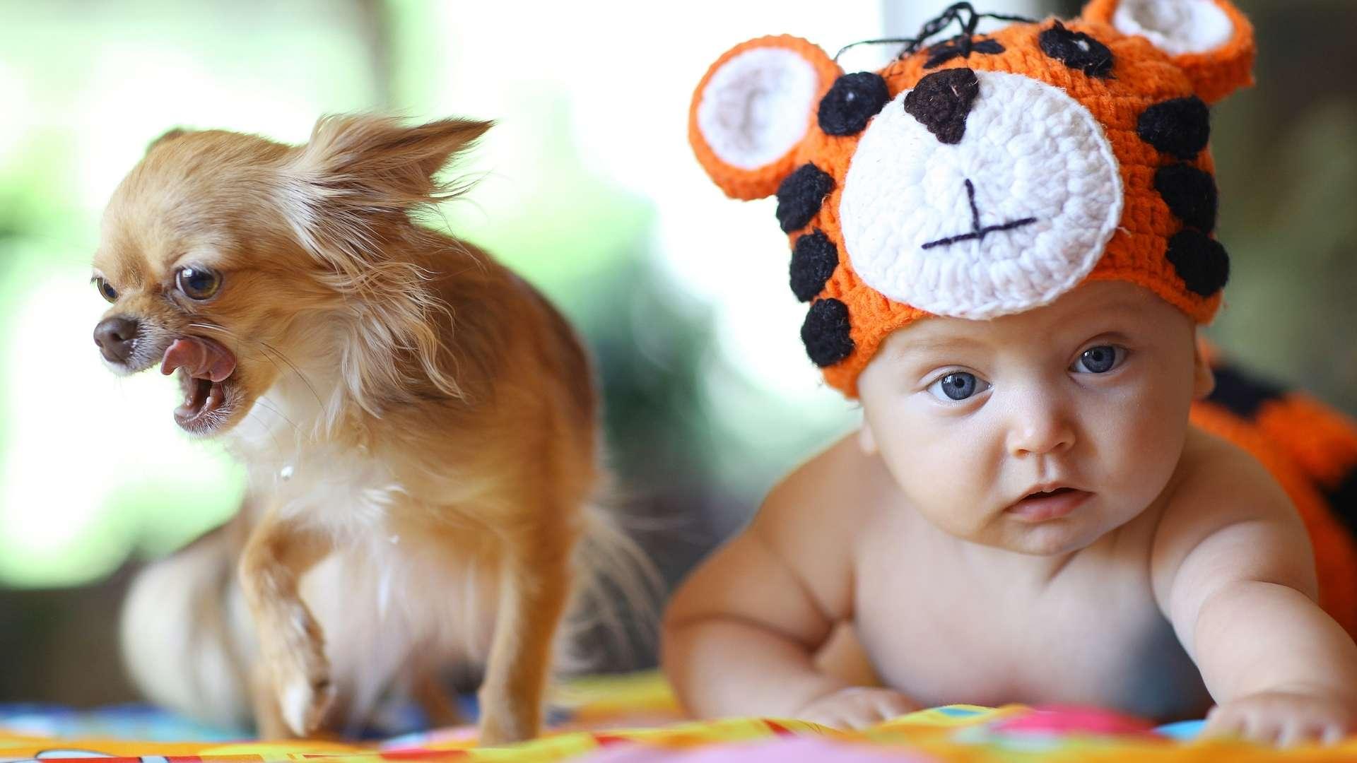 Mały pies i raczkujące dziecko