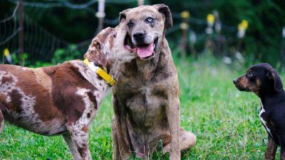 Dwa psy bawią się ze sobą