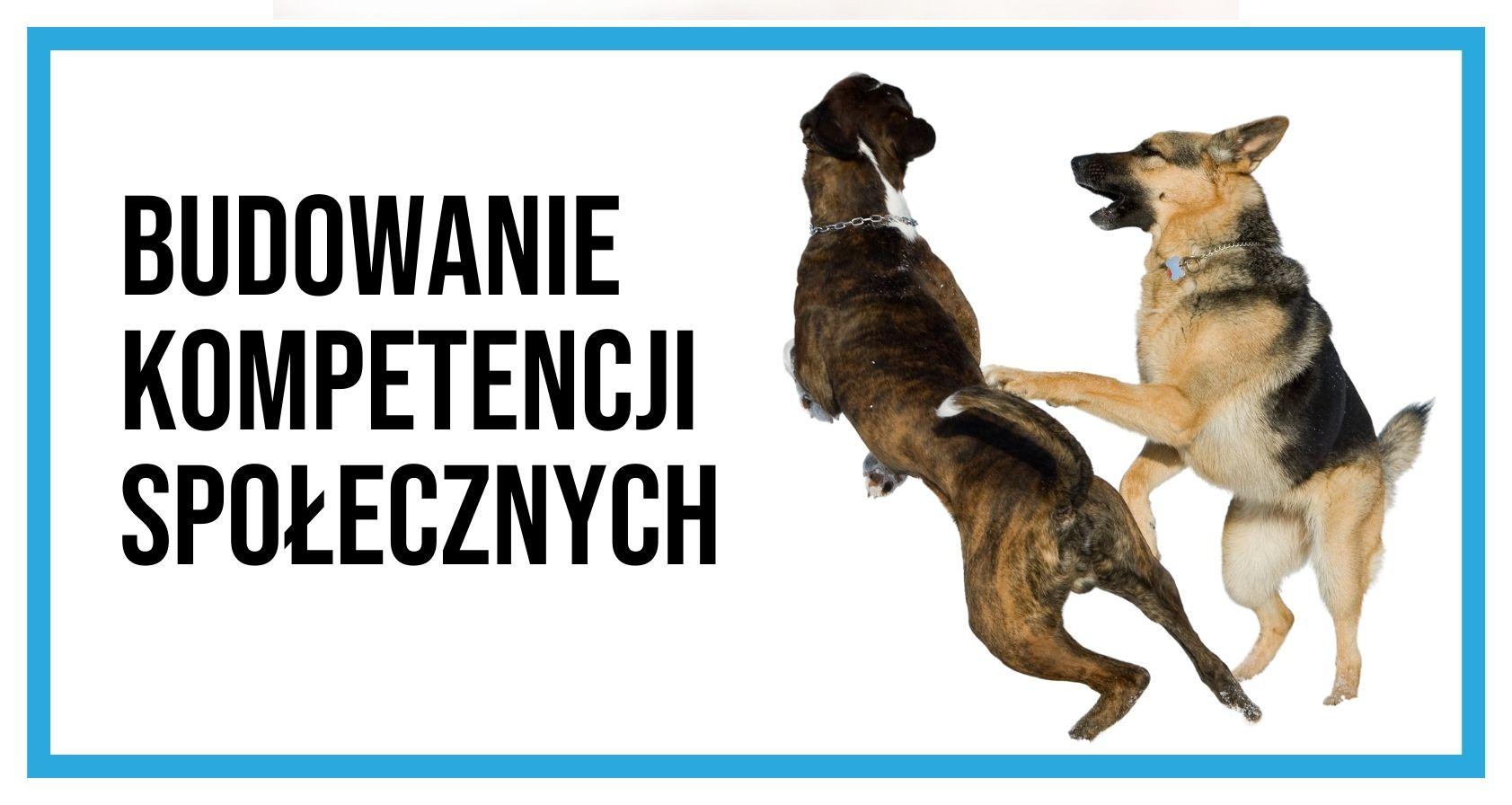 Dwa psy skaczą na siebie