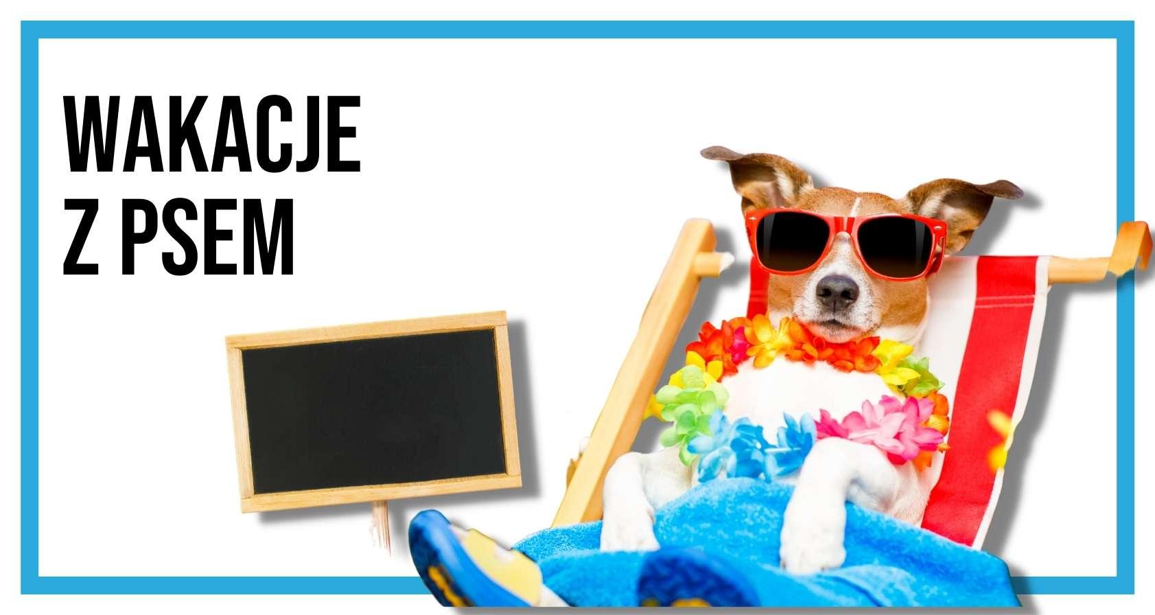 Pies w okularach przeciwsłonecznych leżący na leżaku plażowym