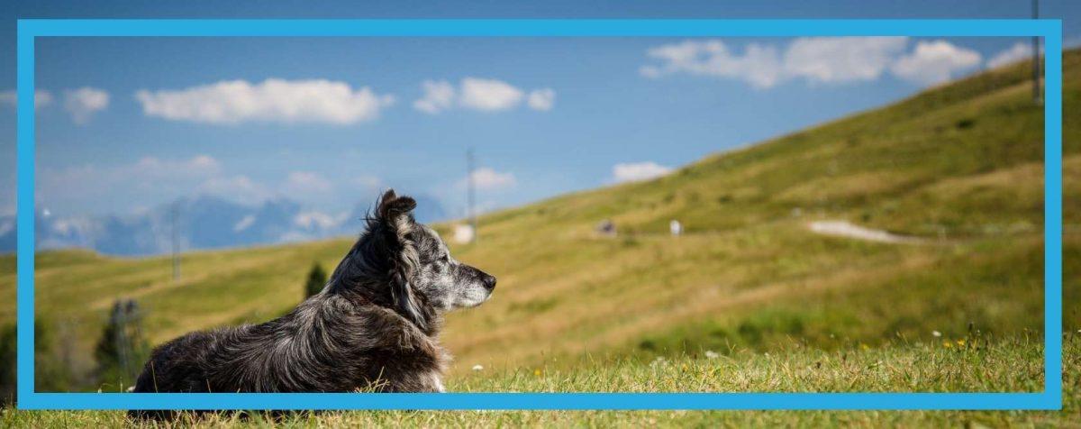 Pies na świeżym powietrzu