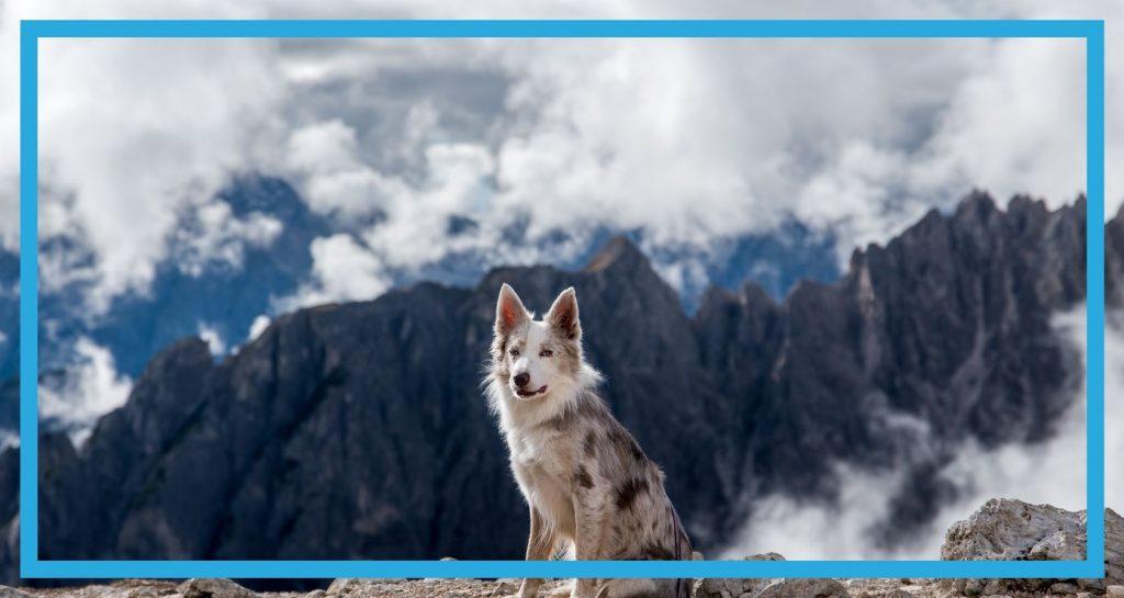 Pies na wycieczce w górach