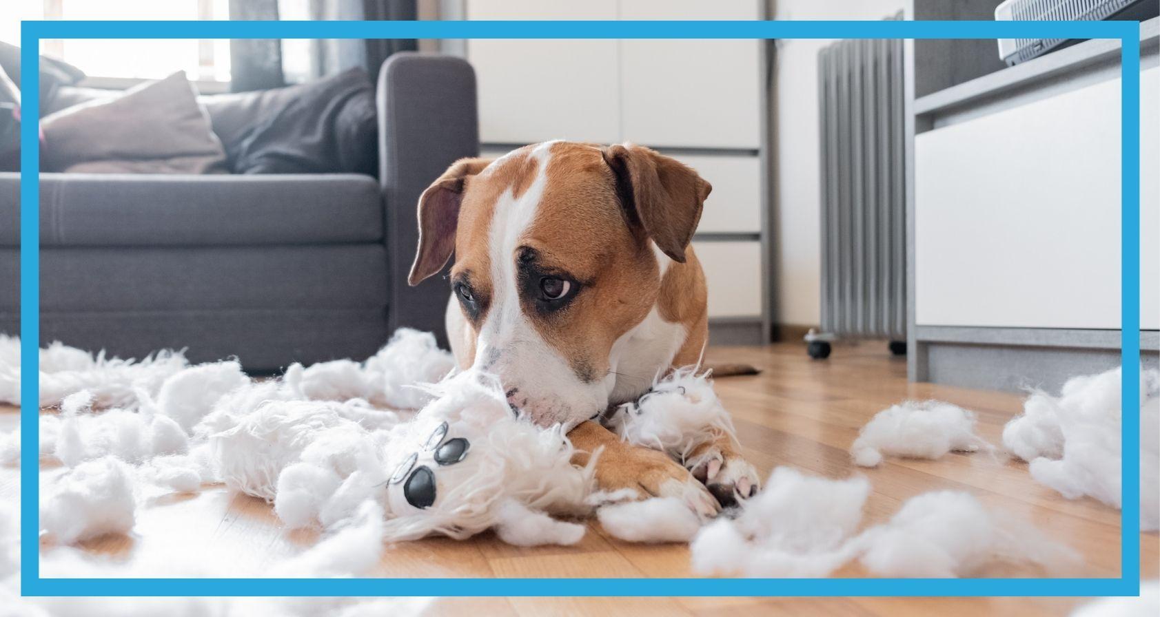 Pies, który zniszczył pluszową zabawkę