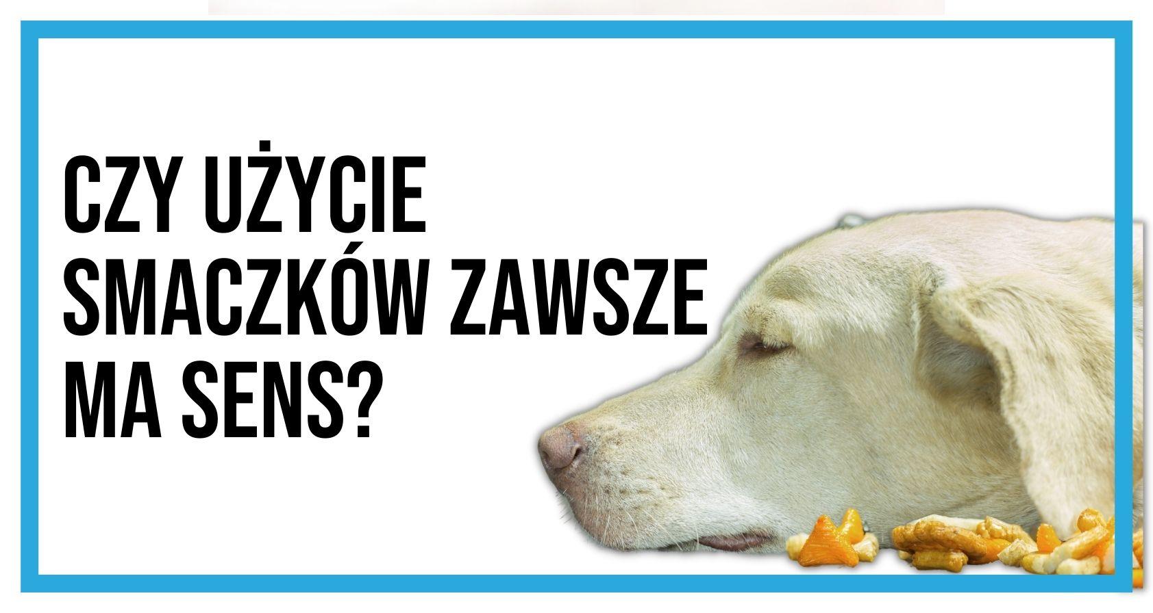 Szkolenie psa. Czy użycie smakołyków zawsze ma sens?